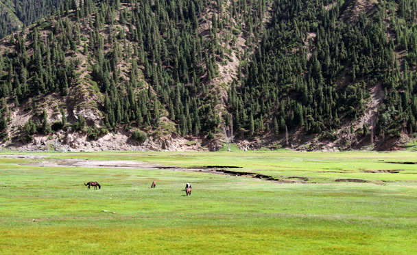 Horses on the meadows by the lake - Bayinbuluke Grasslands, Xinjiang, July 2016