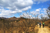 Hikers walking through chestnut orchards