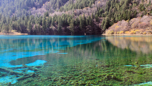 A clear lake surrounded by pines in Jiuzhaigou National Park, Sichuan, China