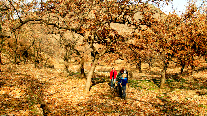 Hiking through a chestnut orchard