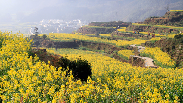 Terraced hills covered with flowers