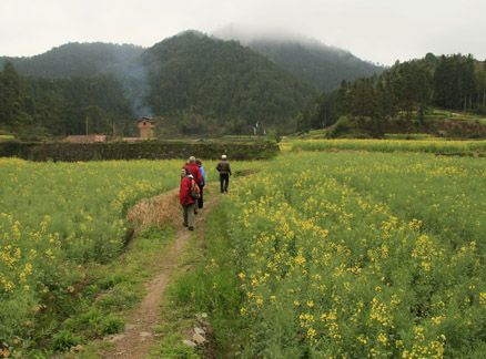 Fields of flowers, Beijing Hikers Wuyuan Sea of Flowers trip, 2010/04/3-5