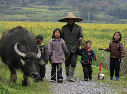 Kids, man, water buffalo, Beijing Hikers Wuyuan Sea of Flowers trip, 2010/04/3-5