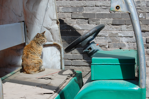 a cat, Beijing Hikers Two days in Pingyao Ancient City , 2013/04/06