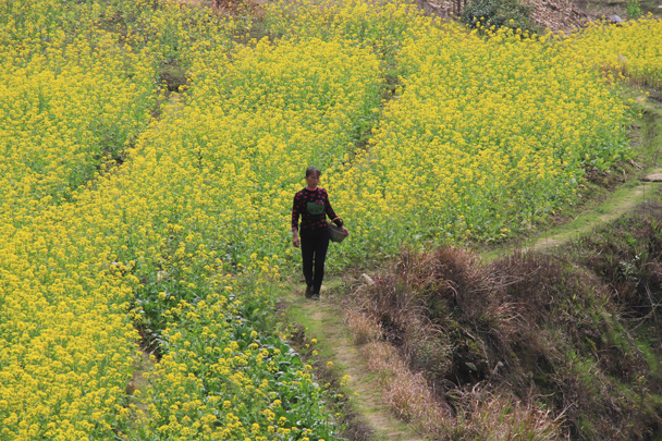 Field trails lead through the terraces. Locals follow them to work, we follow them for a scenic walk - Wuyuan County, Jiangxi Province, 2014/03