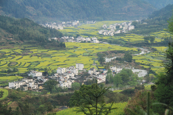 More great views of villages surrounded by fields of flowers - Wuyuan County, Jiangxi Province, 2014/03