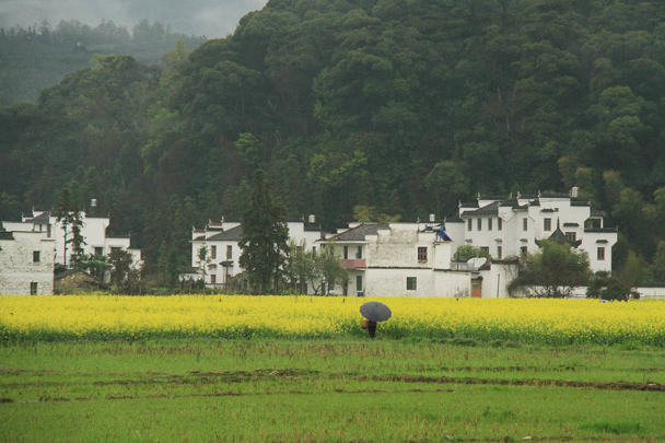 Fields, whitewashed houses, and forested hills - Wuyuan County, Jiangxi Province, 2014/03
