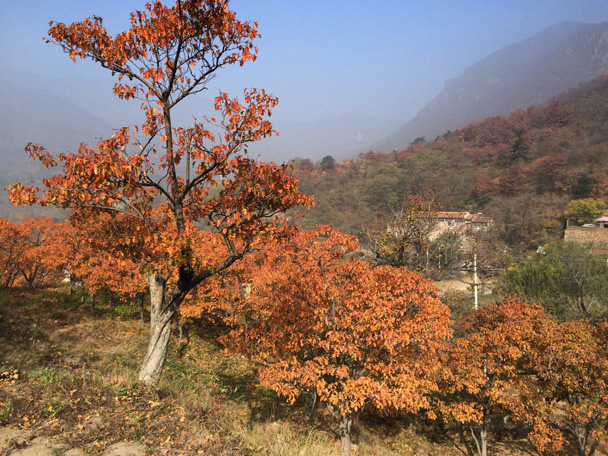 Our views included hills and farmland in the background - Walk Down the Incense Trail hike, 2014/10/23