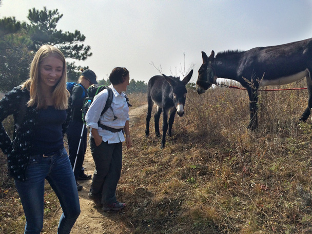 Some of the members of our group admire the animals before continuing their walk - Walk Down the Incense Trail hike, 2014/10/23