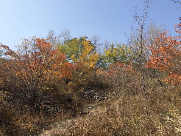 The forest was filled with brightly colored autumn leaves - Walk Down the Incense Trail hike, 2014/10/23