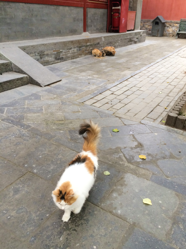 Some animals, such as cats and chickens, also inhabit the temple grounds - Walk Down the Incense Trail hike, 2014/10/23