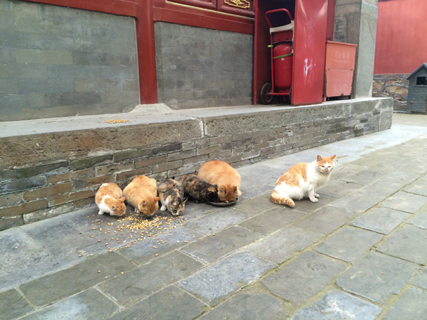 Feeding time for the resident cats! - Walk Down the Incense Trail hike, 2014/10/23