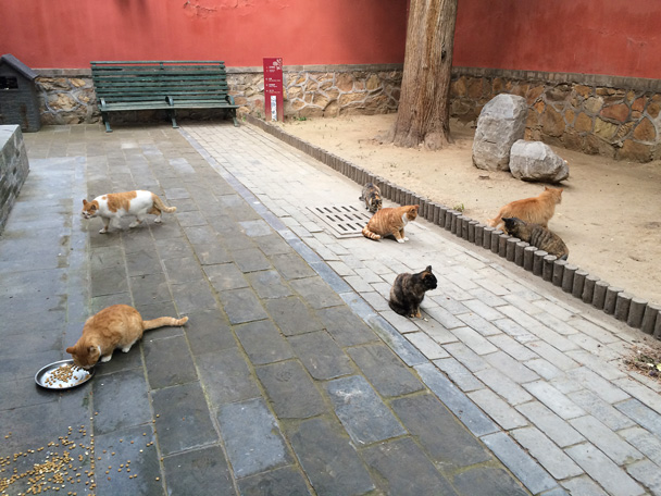 Dajue Temple is home to more than a few cats - Walk Down the Incense Trail hike, 2014/10/23