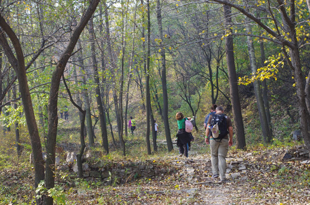 The Hike for Fun trail went up through a leafy forest full of autumn colours - Hike Fest 2015