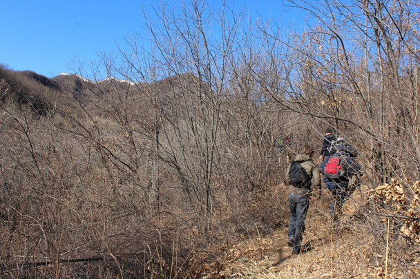 The Great Wall comes into sight, way up on a ridge - Jiankou Big West Great Wall, 2015/02/11