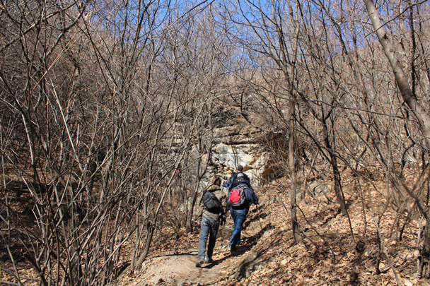 The forest gets thicker - Jiankou Big West Great Wall, 2015/02/11