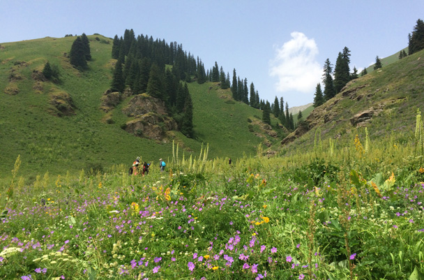 A valley full of flowers - Bayinbuluke Grasslands, Xinjiang, July 2016