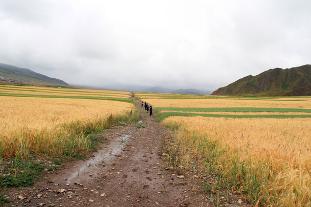 We went for a walk in the fields - Xiahe, Labrang Monastery, and Zhagana, Gansu Province, September 2015