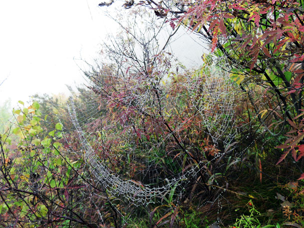 A spider web capturing the dew - Camping at the Gubeikou Great Wall, 2015/10