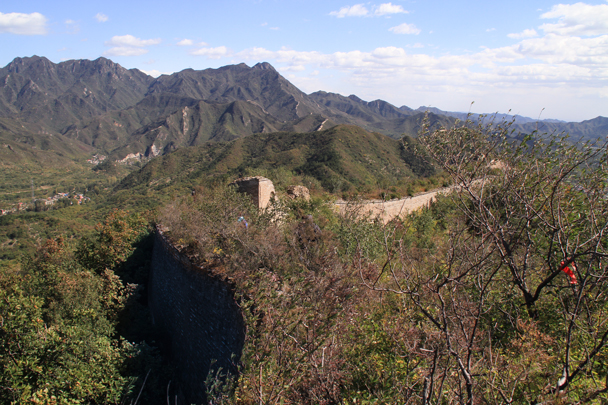 This wild section of Great Wall is covered in brush - Walled Village to Huanghuacheng Great Wall, 2015/10/09