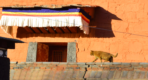 A cat also enjoying the sunshine - Labrang Monastery and Tibetan New Year, 2016/02