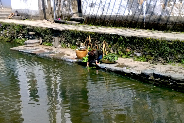 Washing vegetables in the canal - Wuyuan, Jiangxi Province, 2016/03