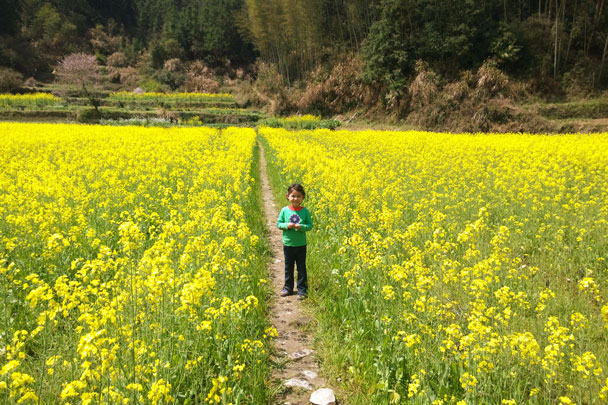 Our youngest hiker in the midst of the flowers - Wuyuan, Jiangxi Province, 2016/03