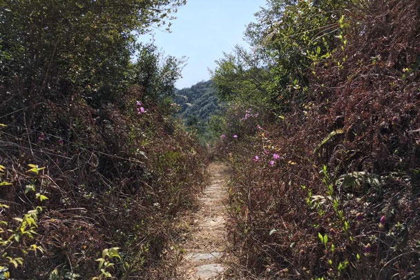 A narrow trail over a hill - Wuyuan, Jiangxi Province, 2016/03