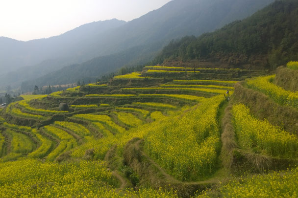 Jiangling is where you find the most flowers: the flat land is full of fields, and the mountains are also terraced - Wuyuan, Jiangxi Province, 2016/03