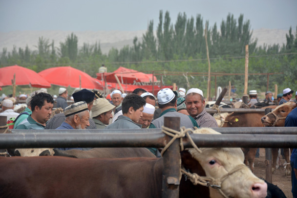 Busy! - Along the Silk Road from Korla to Kashgar, June 2016