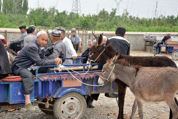 Man is waiting for a buyer for his donkeys - Along the Silk Road from Korla to Kashgar, June 2016