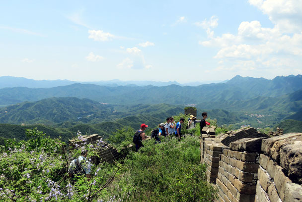 We headed down a part of the wall that is overgrown with bushes - Great Wall Spur hike, 2016/07/13