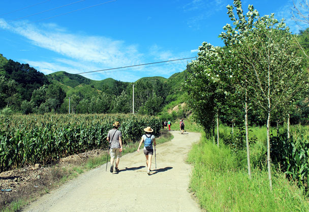 Hiking in to Hemp Village, passing cornfields - Hemp Village to Jinshanling Great Wall East, 2016/08/14