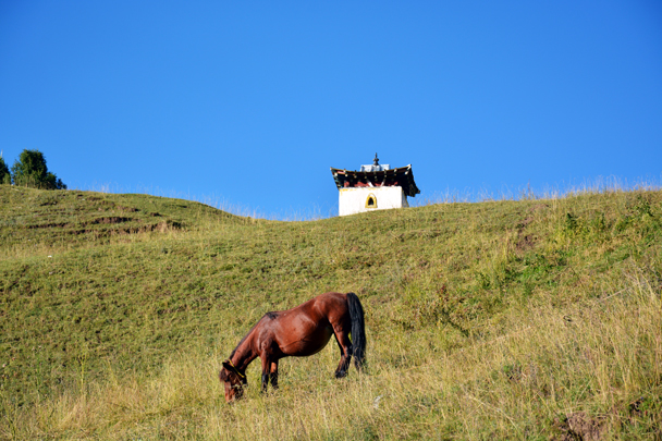 Horse on the hill - Xiahe, Labrang Monastery, and the Zhagana area in southern Gansu, September 2016