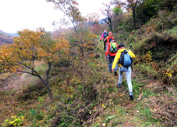 Hikers follow the narrow switchbacks up the hill - Miaofengshan Super Loop, 2016/10/22