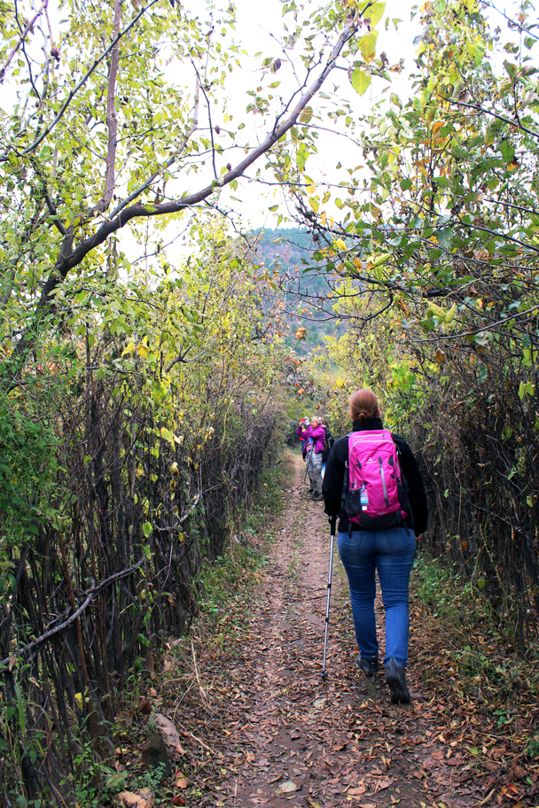 The hike starts out from a village and we walked through an orchard - Tomb Raiders Hike, 2016/10/23