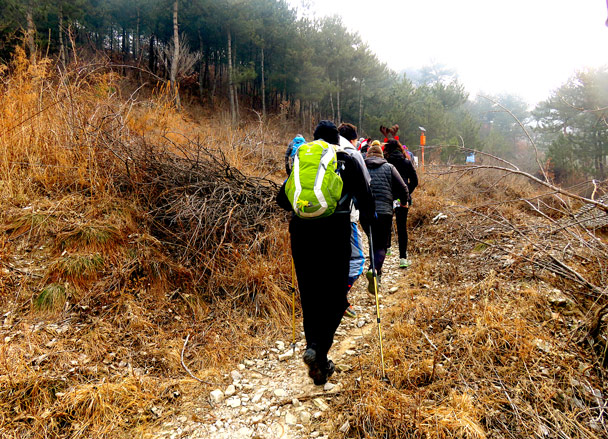 Hiking though the pine trees to begin - Christmas on the Great Wall, 2016/12/25