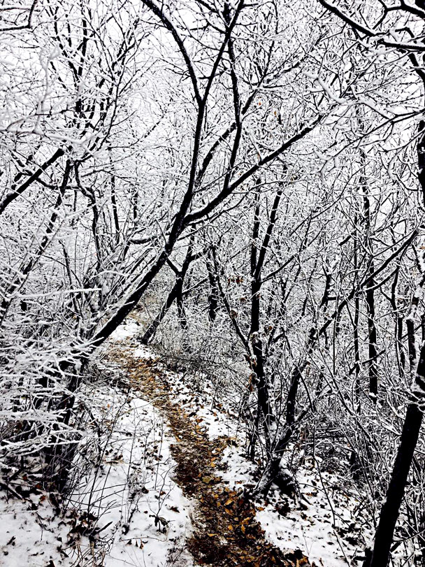 A detour around a broken section of wall took us through snow-covered trees - Stone Valley Great Wall snow hike, 2017/01/07