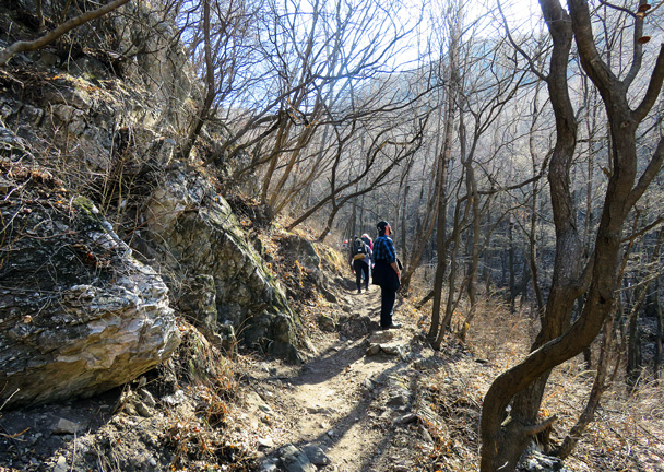 A narrow path through forest, with the wall in view high above - Jiankou to Mutianyu Great Wall, 2017/3/08