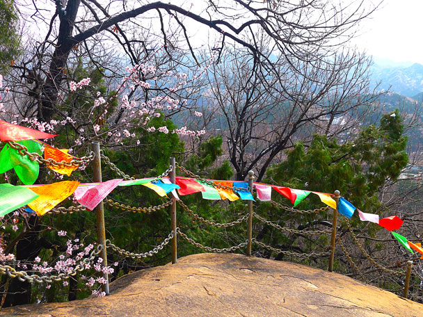 Prayer flags and pink blossoms - Silver Pagodas to De Tomb, 2017/3/25