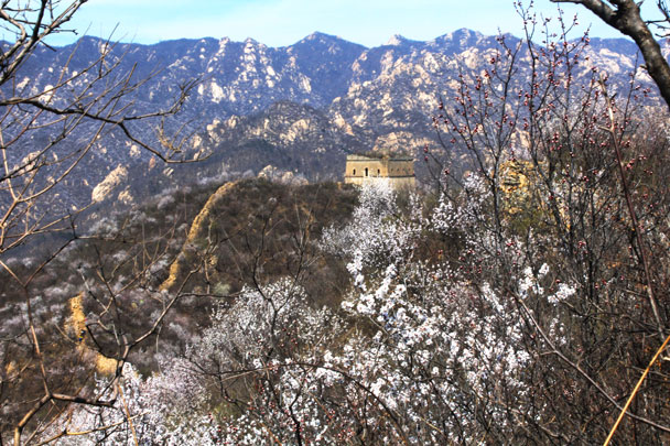 A tower seen through the flowers - Walled Village to Huanghuacheng Great Wall, 2017/4/02
