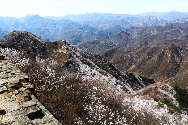 The hills were full of flowers - Walled Village to Huanghuacheng Great Wall, 2017/4/02