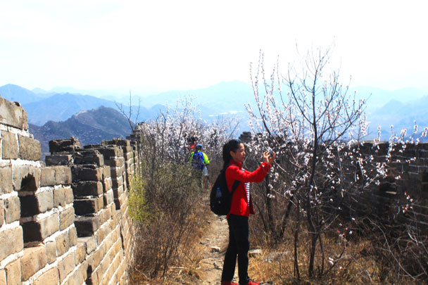 Getting a close up of the flowers - Walled Village to Huanghuacheng Great Wall, 2017/4/02