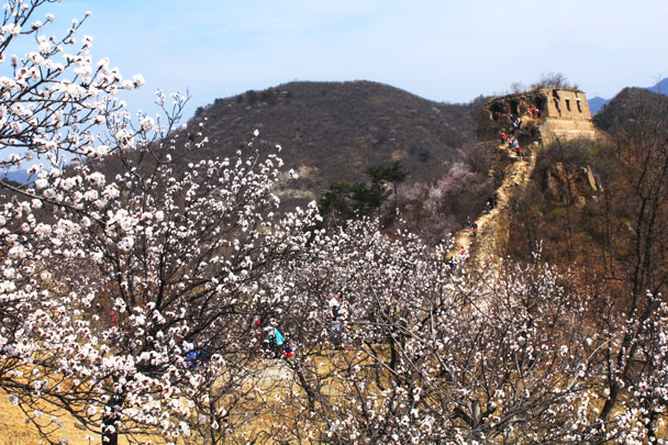 More flowers - Walled Village to Huanghuacheng Great Wall, 2017/4/02
