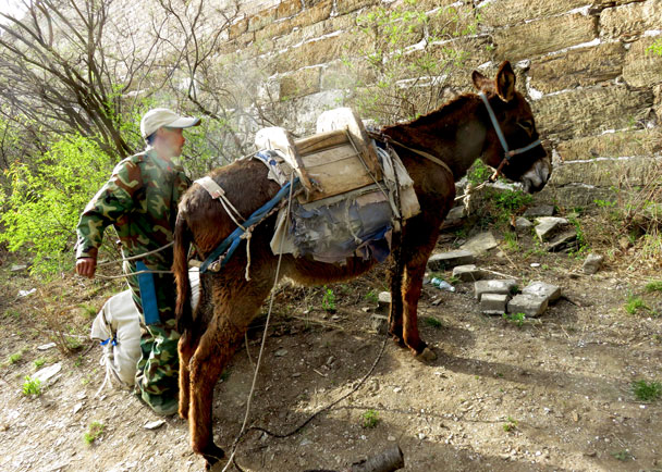 The donkey is about to go off duty - Camping at the Great Wall Spur, 2017/4/19