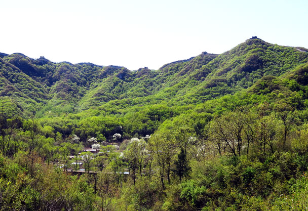 Great Wall atop the green hills - Earth Day clean up hike at the Jiankou Great Wall, 2017/4/23