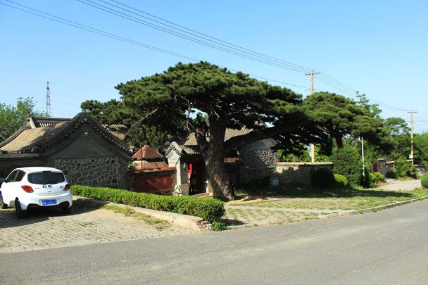 In the village at the end of the trail is a small temple with an ancient pine tree -