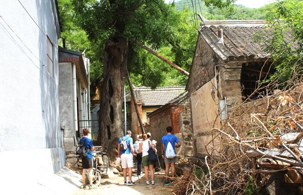 In the village, inspecting one of the ancient trees - Walled Village to Huanghuacheng Great Wall, 2017/6/3