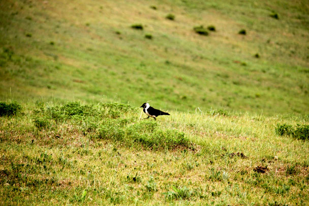 Bashang Grasslands, Hebei Province, 2017/06/15-16 photo #14