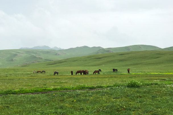 long distance trip! Bayinbuluke Grasslands, Xinjiang Province, 2017/6/20-25 photo #27